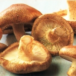 Shiitake Mushroom combats HIV, cancer &#038; Hepatitis