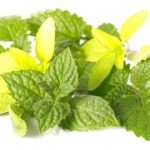 5 Herbs To Soothe Indigestion