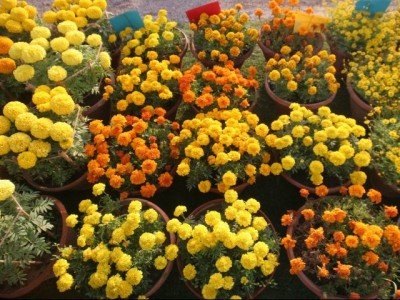 60th annual flower Show karachi