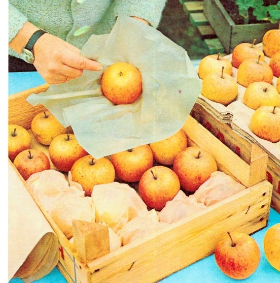 picking and storing apples