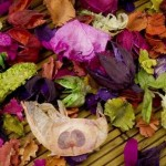 Preserving Petals: How to Dry Flowers