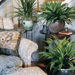 Plants That Flourish Inside the House
