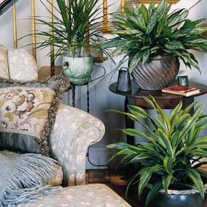 Significance of Indoor Plant Decor