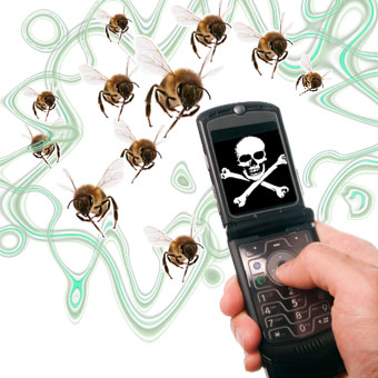 Is your cell phone killing bees?