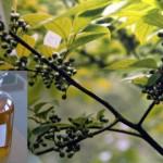 Health Benefits from Eucalyptus