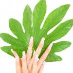 How to Have Well-groomed Hands