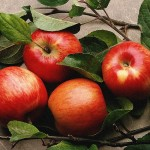 The Fruit of Life – Apples