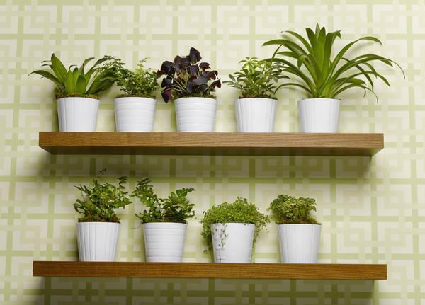 Bringing Outdoor Plants Indoors