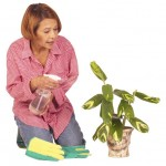 Ways you can kill a Houseplant