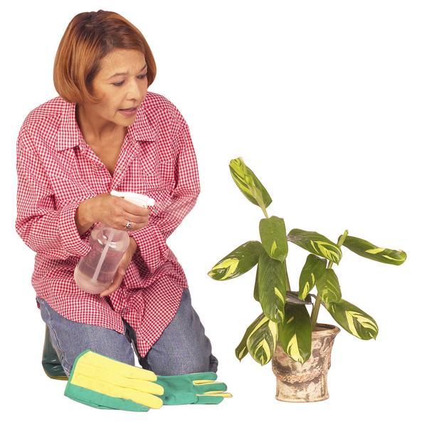 Ways you can kill a Houseplant